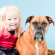 Studio shot of brown boxer dog isolated on light blue background. — Stok fotoğraf