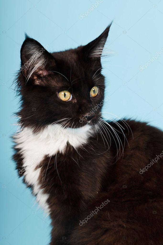 kittens tulsa