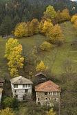 Herfst bomen — Stockfoto