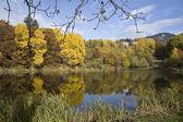 Alberi d'autunnali, lago — Foto Stock