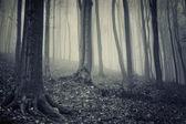 Sis ile eski orman — Stok fotoğraf