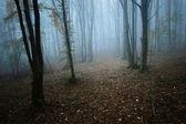 Promień słońca w ciemnym lesie — Zdjęcie stockowe