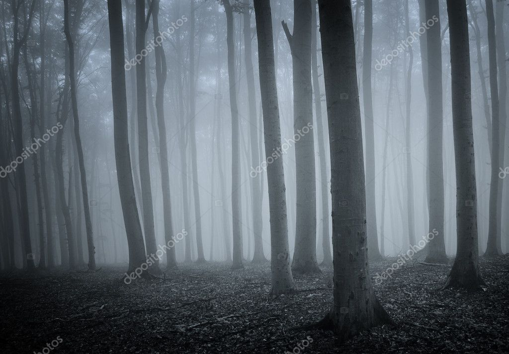 Forest with old trees and fog — Photo #10981380