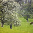 Landscape with flowers trees and horse - Stock Photo