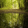 Reflection of trees in a lake from a forest — Stock Photo