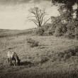 Vintage photo of a landscape with horse at summer — Stock Photo