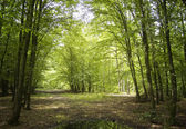 Sonnenschein in einem grünen Wald — Stockfoto