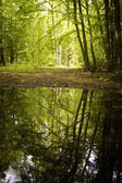Reflection of trees in a lake from a forest — Foto Stock