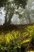 Květiny a stromy v lese — Stock fotografie