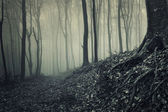 Roots of a tree from a misty forest — Photo