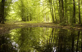 Suya yansıtan bir yeşil ormandaki ağaçlar — Stok fotoğraf