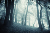 Cold forest with fog at evening — Stock Photo