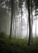 Vertical photo of a green forest with fog — Stock Photo