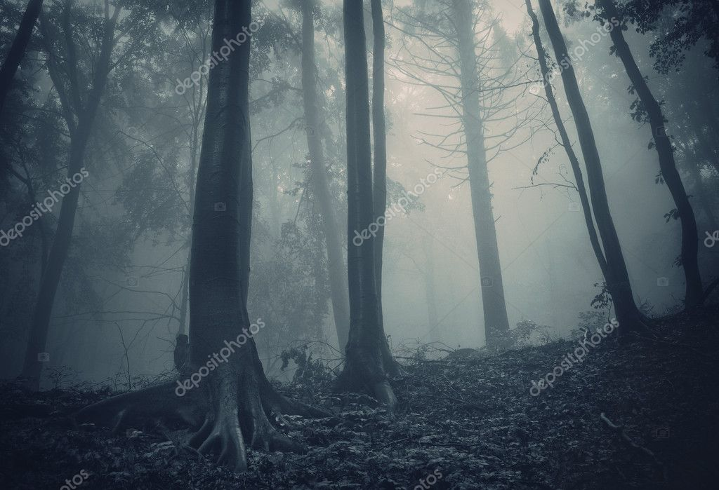 Pine trees in a dark forest with strange fog — Photo #11086734