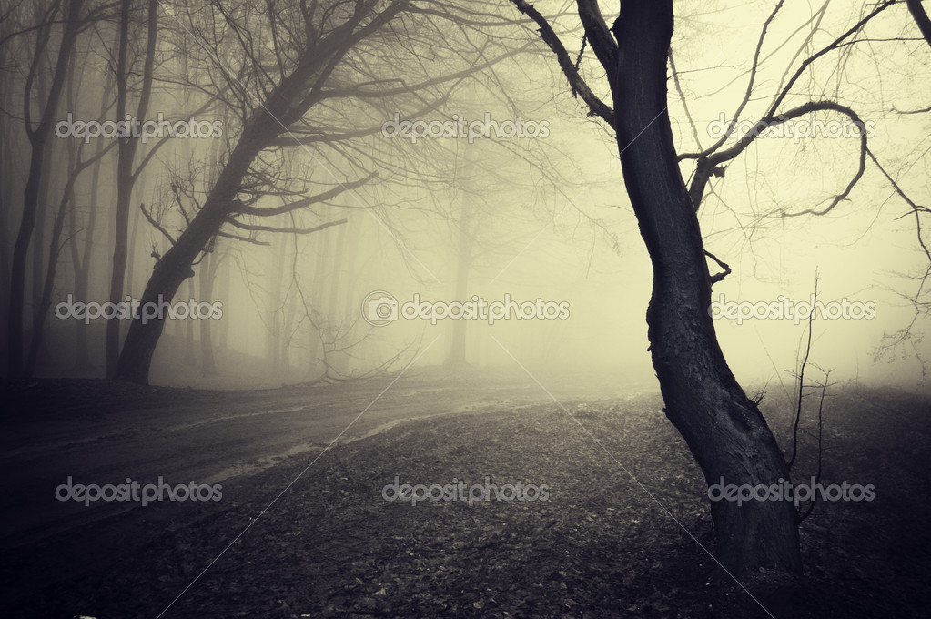 Фотообои Old looking photo of a path through a forest with fog at morning