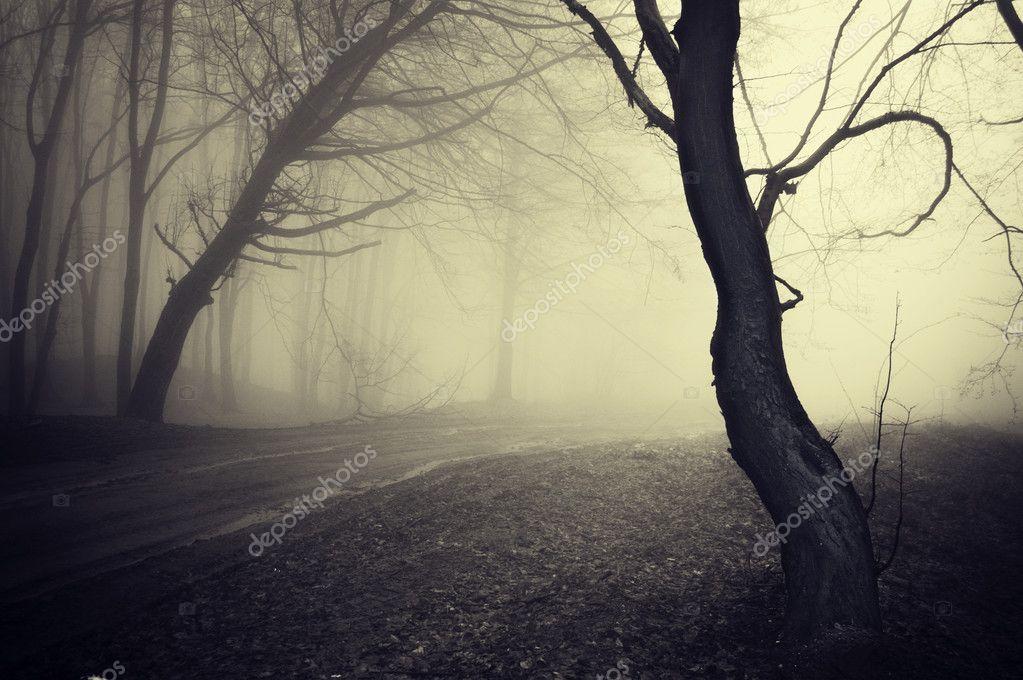 Фотообои Старые смотреть фото путь через лес, с туманом в утро