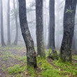 Stock Photo: Group of trees in forest with green grass and fog