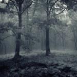 chênes dans une forêt de brouillard — Photo #11147686