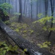 Stock Photo: Night in misty forest