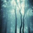 Vertical photo of trees in a forest with fog — Photo #11147706