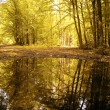 Autumn colors of a beautiful forest reflecting in water — Stock Photo