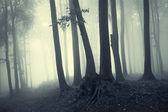 Träd i counter ljus i en skog — Stockfoto