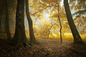 Autumn in a colorful forest with orange foliage — Stock Photo