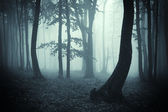 Tree silhouettes in a dark forest — Stock Photo