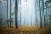 Forest with orange leafs and grass — Stock Photo