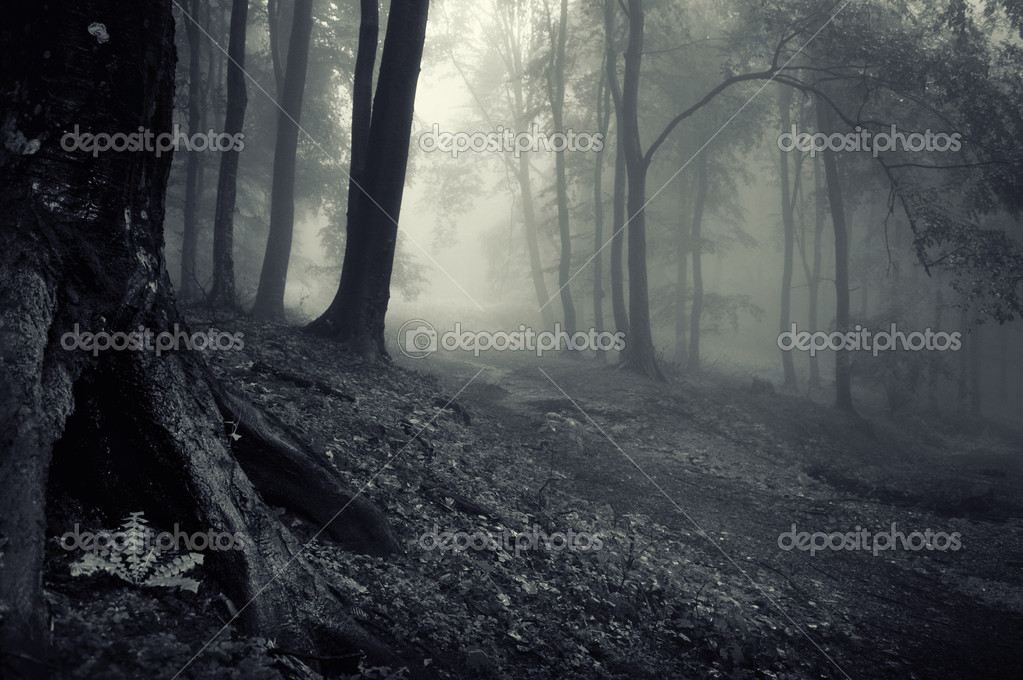 Mysterious looking forest on a misty evening  — Photo #11147772