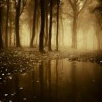 bos met vijver in het najaar van — Stockfoto