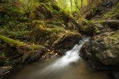 River in a green forest with rocks and moss — Stock Photo