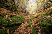 Leaves on forest ground in autumn — Stock Photo