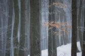 冬の森林で雪の嵐 — ストック写真