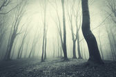 Scary forest with black trees — Stock Photo