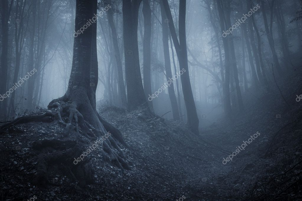 Night in a dark mysterious forest with fog and black trees  — Photo #11286498