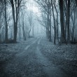 Photo: Road trough a dark scary forest with fog