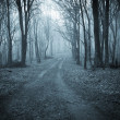 Stock Photo: Road trough dark scary forest with fog