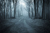 Road trough a dark scary forest with fog — Stock Photo