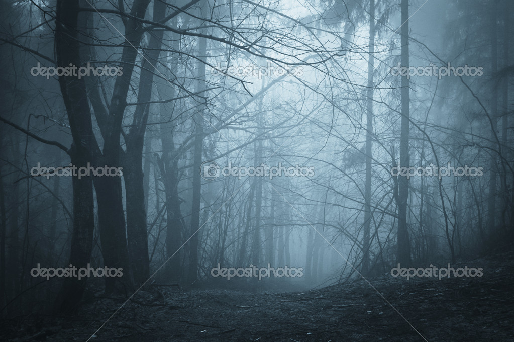 Фотообои Darkness in a forest with fog