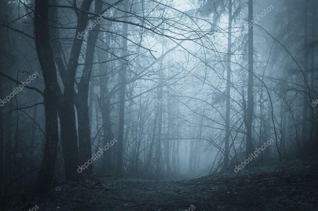 Фотообои Тьма в лесу с туман