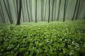 Blooming bosque de niebla y flores — Foto de Stock
