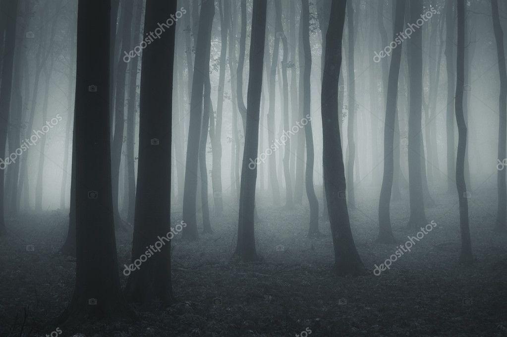 Фотообои Темный лес с туман и холодный свет