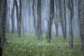 Mist in a blooming forest — Stock Photo