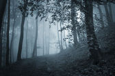 Path through a dark forest with blue light — Stock Photo