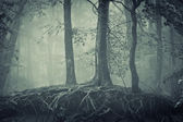 Scary trees with roots in a dark forest — Stock Photo