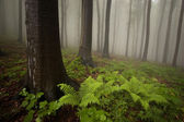 Forest with fern — Stockfoto