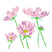 Bouquet flower cosmos bipinnatus raster — Stock Photo