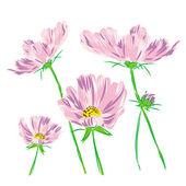 Bouquet flower cosmos bipinnatus raster — Stock Photo