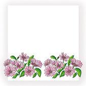 Daisywheels rose border — Stock Photo